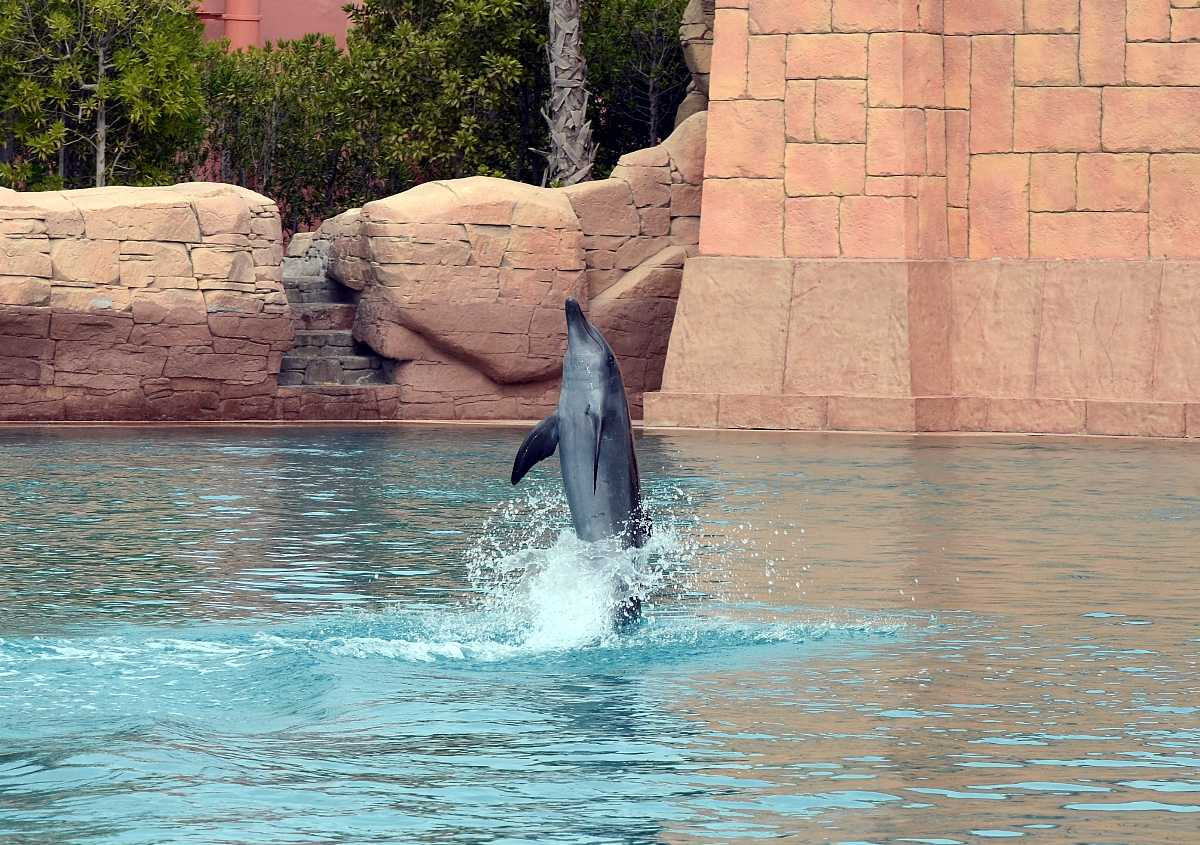 خليج الدلافين