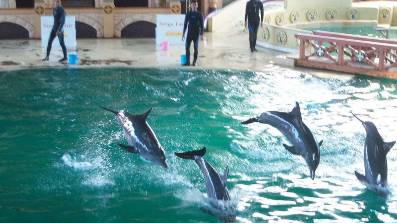 الدلافين في انكول دريم لاند