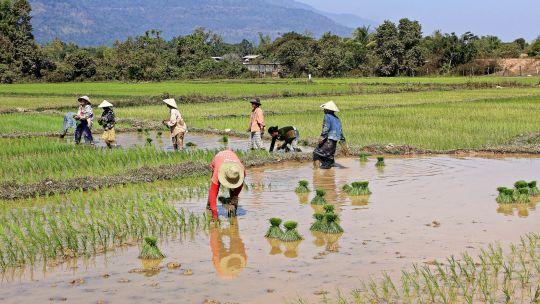 الزراعة في فيينتيان
