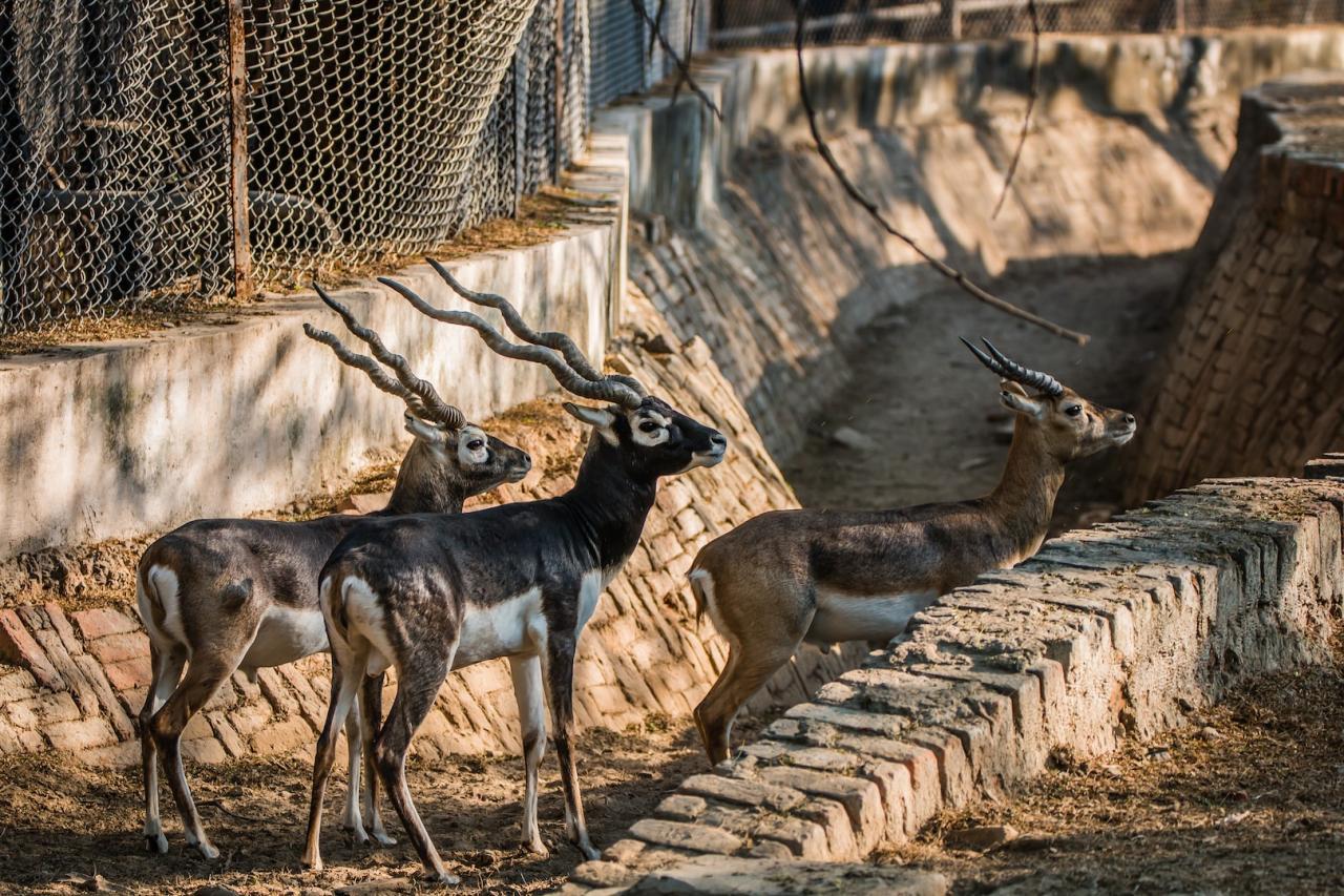 حديقة حيوان نيودلهي