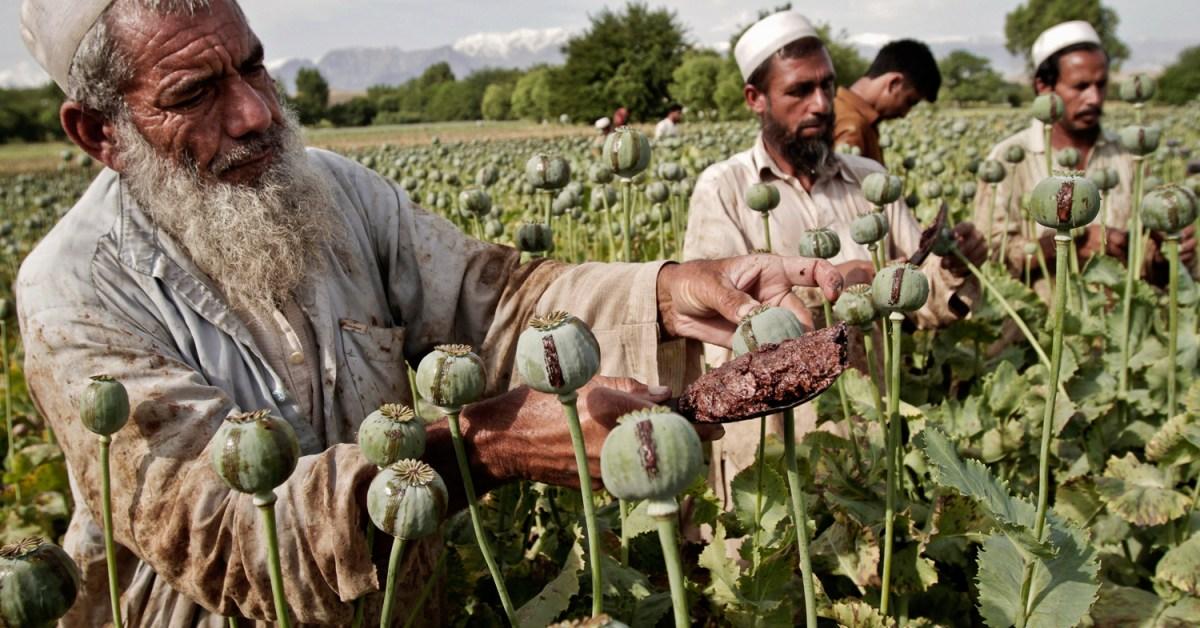 الاقتصاد في مدينة كابول