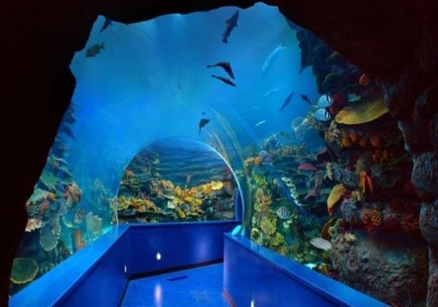 متحف ومعهد الأحياء المائية بالأنفوشي