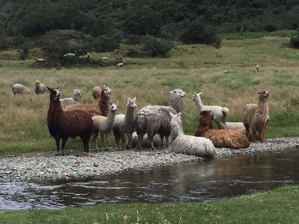 حيوانات على نهر بالإكوادور
