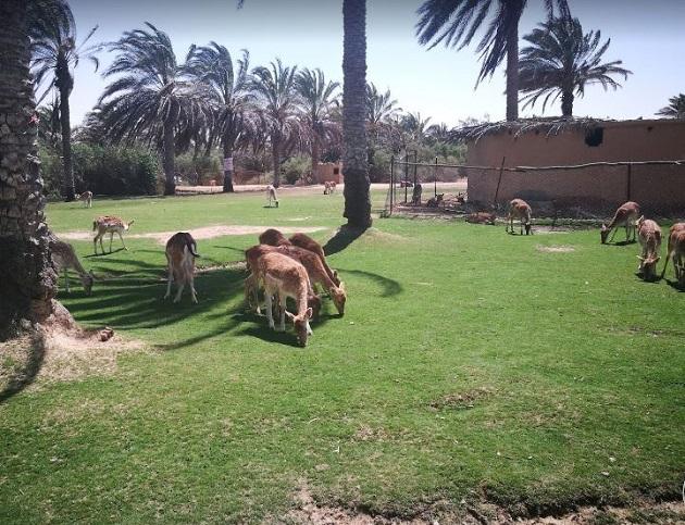 يظهر في الصورة بعض الحيوانات في أفريكانو بارك الإسكندرية