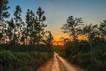 محمية غابة ماونتن باين ريدج| عاصمة بليز